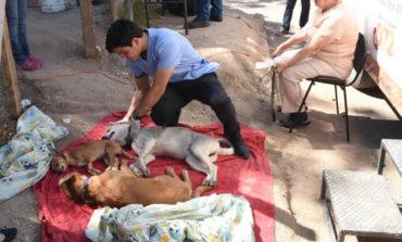 Esterilizan perros y gatos en colonia 4 Olivos