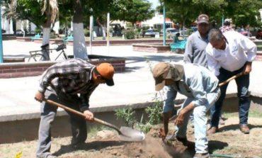 Ayuntamiento reforesta áreas públicas a través de ecología y turismo