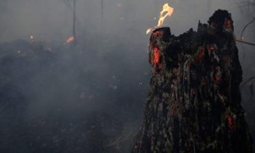 Casi 7 mil incendios acaban con la Cuenca del Congo
