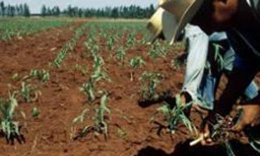 Analiza Drry Reducción De Siembras Por Falta De Agua
