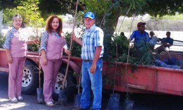 Donación de 800 árboles de la variedad Neem y Olivo Negro para reforestar áreas verdes