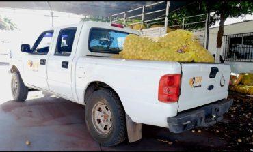 Se han entregado más de mil despensas y 50 toneladas de papa, en colonias y comunidades