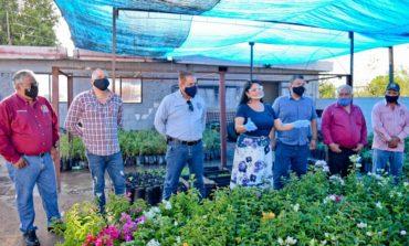 Embellecen espacios de Navojoa con bugambilias e invitan a ciudadanos a solicitar árboles.