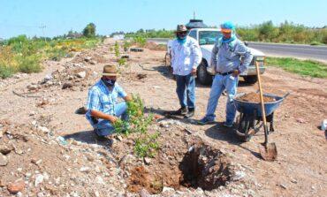 Ecología y Turismo continua con el programa Plantemos Vida