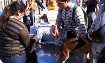 Habrá Pulgatón en Guaymas Norte